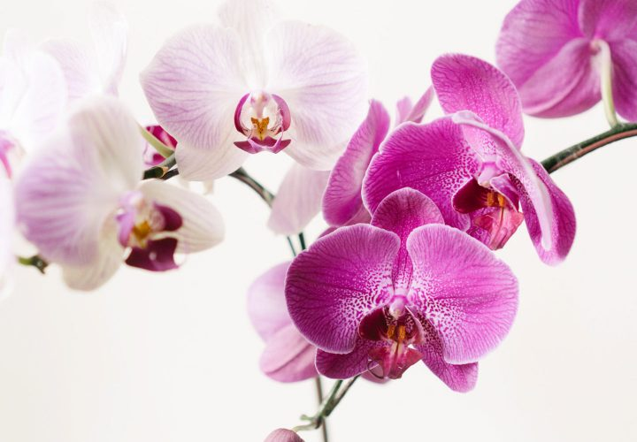 caring-for-orchids-hero
